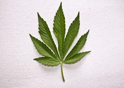 Medical Marijuana In Canada: The Pharmacists' Perspective